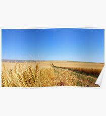 Rolling Fields of Wheat Poster