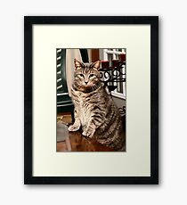 "*•.¸♥♥¸.•*Hear Me I'm Taking A Stand ""More Treats""*•.¸♥♥¸.•* Framed Print"