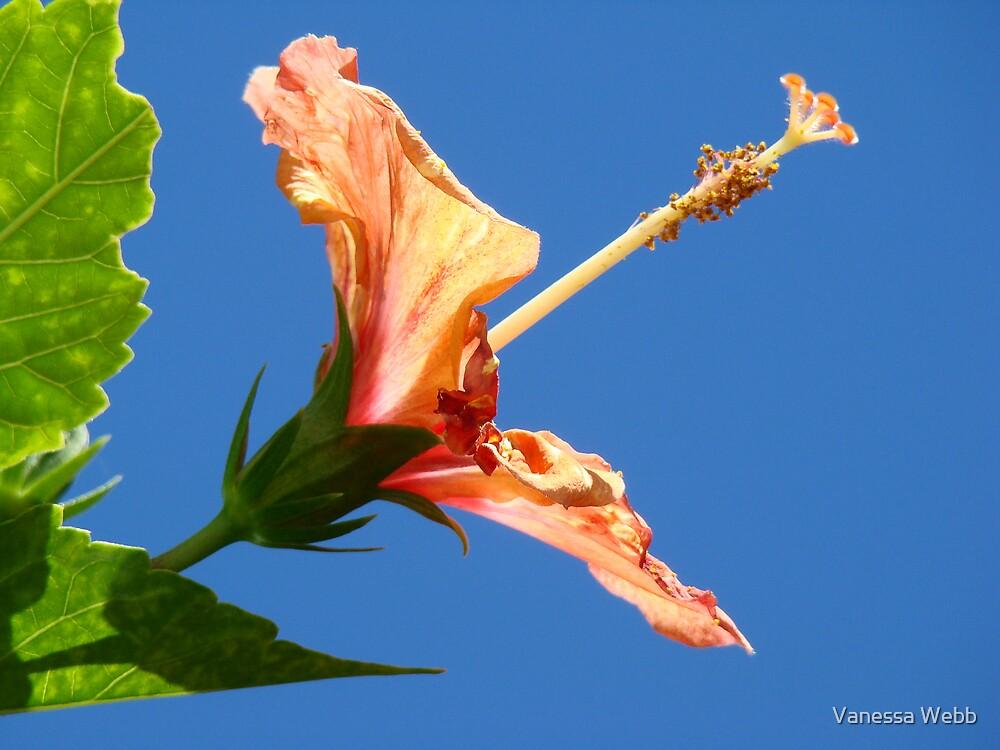 Floating Hibiscus by Vanessa Webb