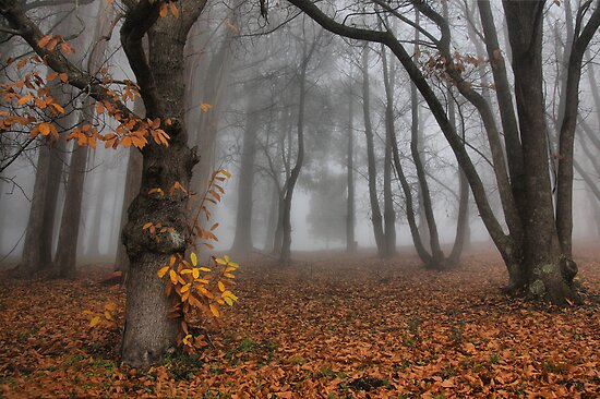 The last of the autumn leaves by Robyn Lakeman