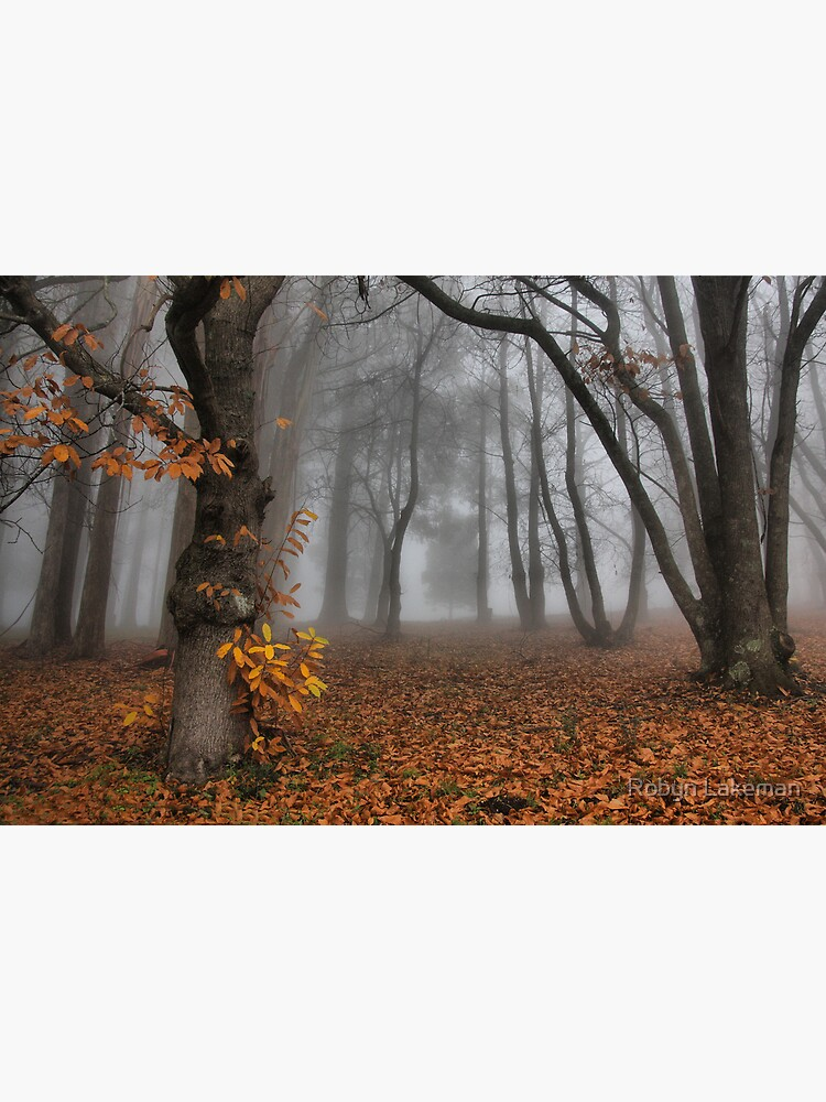 The last of the autumn leaves by Rivergirl