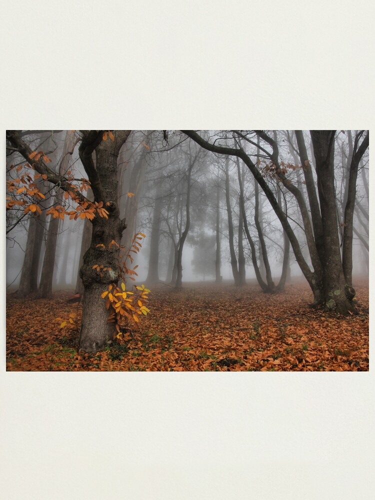 Alternate view of The last of the autumn leaves Photographic Print