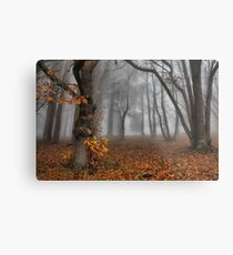The last of the autumn leaves Metal Print