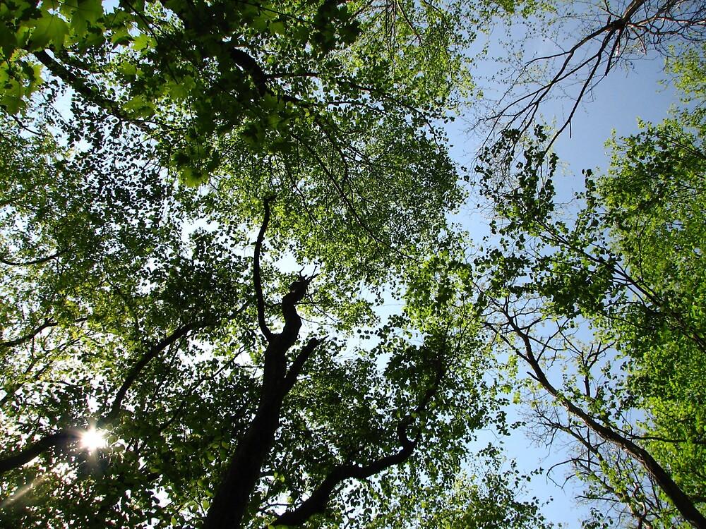 Canopy by Terri Waughtel