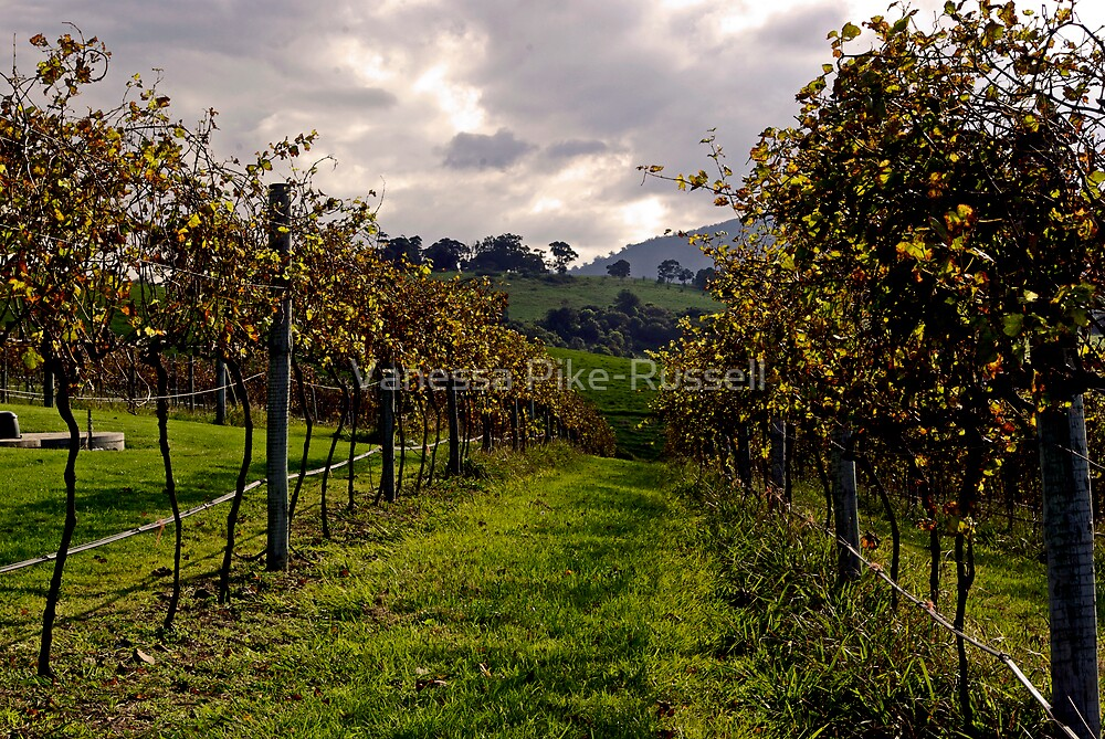 Crooked River Winery, Gerringong, NSW 2535, Australia by Vanessa Pike-Russell
