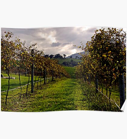 Crooked River Winery, Gerringong, NSW 2535, Australia Poster