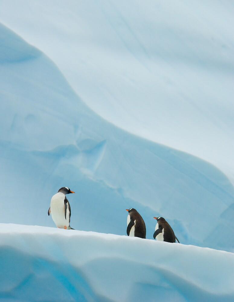 Gentoo Penguins on Ice by Simon Coates