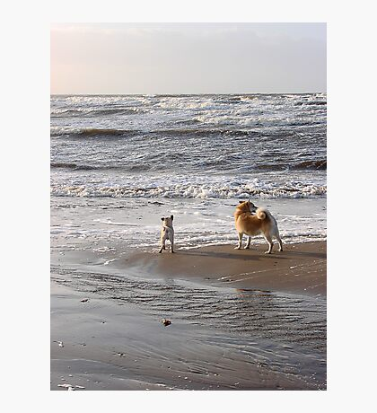 Here, doggy! Photographic Print
