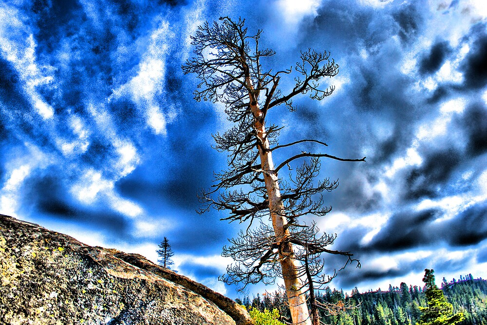 Old tree by JeremiahB