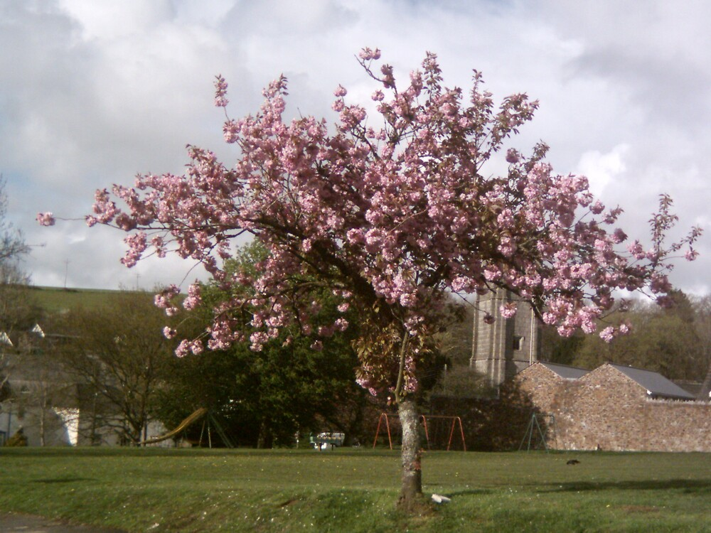 Spring by Kernowpics