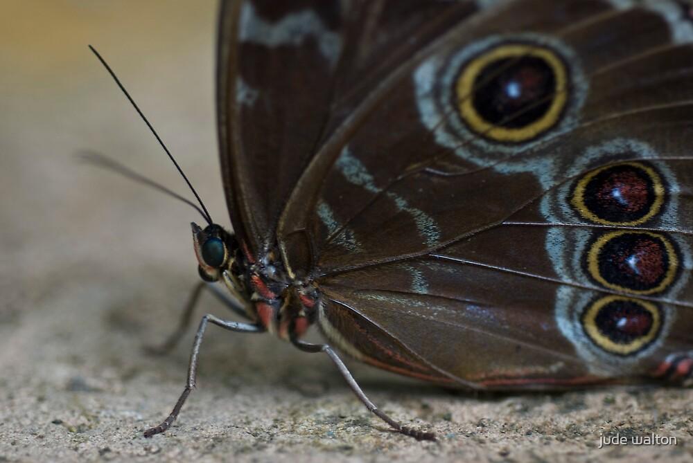 butterfly by jude walton
