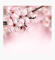 BLOOMING BLOSSOMS Photographic Print