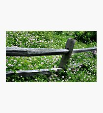Fence of Flowers Photographic Print