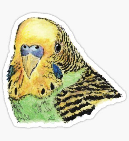 Prettyboy the Green Parakeet Sticker