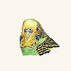 Prettyboy the Green Parakeet by Dan Tabata