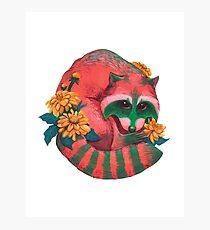Watermelon Raccoon  Photographic Print