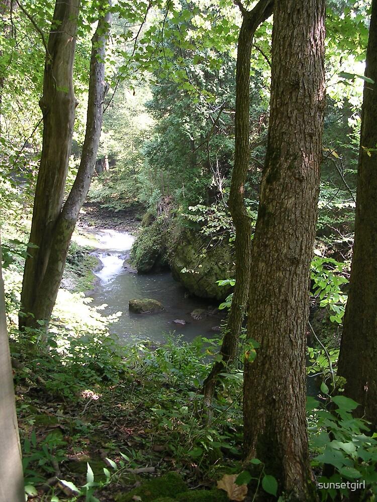 Forest Stream by sunsetgirl