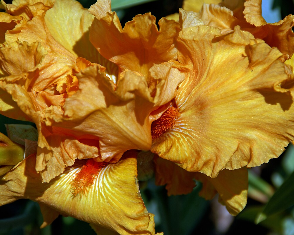 Peachy Petals by Lynda Lehmann