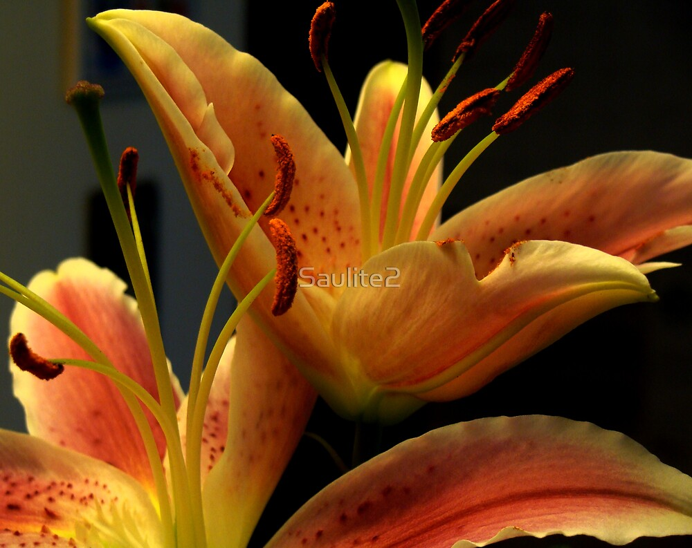 Tiger Lillies. by Saulite2