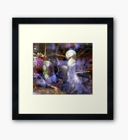 Aquatic Angels Framed Print