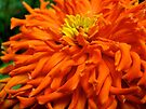 Vibrant Orange  by lindsycarranza
