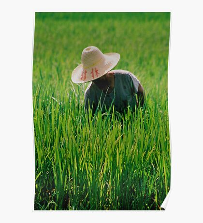 Rice Field Laborer Poster