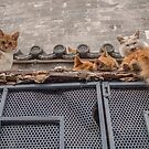 A bunch of cats keep herself warm by Gabriel Quintana  || Worldplaces ||