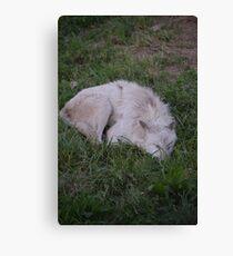 Sleeping Wolf 2 Canvas Print