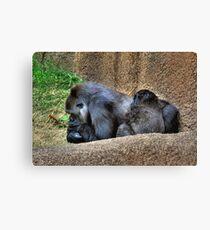 Sleeping Gorillas  Canvas Print