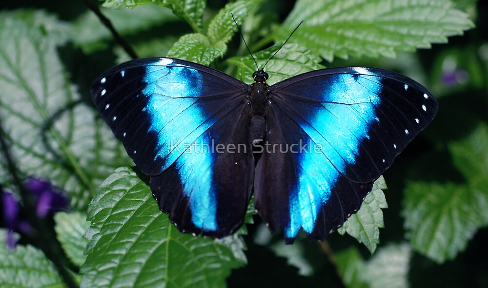 Blue Beauty by Kathleen Struckle