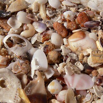 Shell Secrets by HoustonB