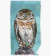 Burrowing Owl Watercolor Poster