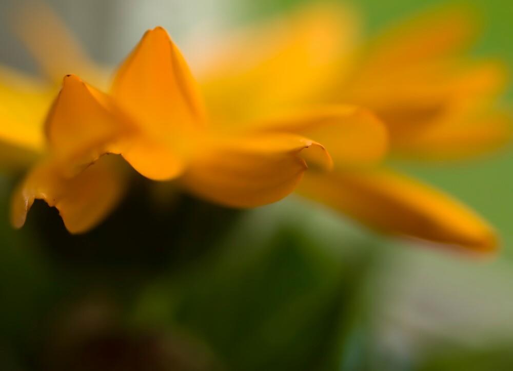 Soft Golden Layers by Jenni77
