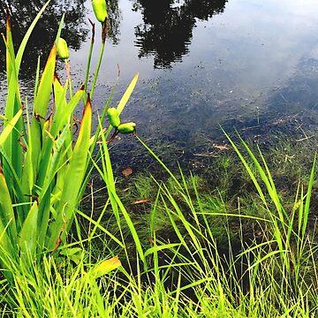 water reeds by LBehrendtDesign