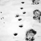 Tracks  by Bahoke