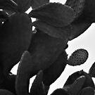 «Cactus en blanco y negro» de by-jwp