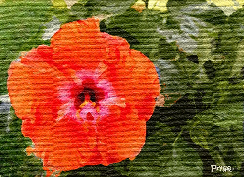 Hibiscus by jpryce