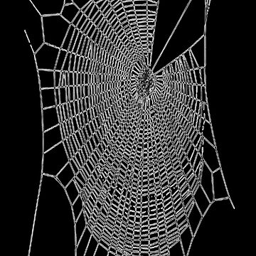 A Large Illustration Of A Spider's Web by taiche