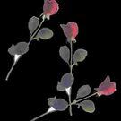 Rose Preserved by rebecca smith