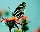 Butterfly Lick by Mary Campbell