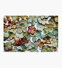 Hydrangea Petals no. 2 Photographic Print