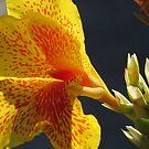 flores by Bernhard Matejka