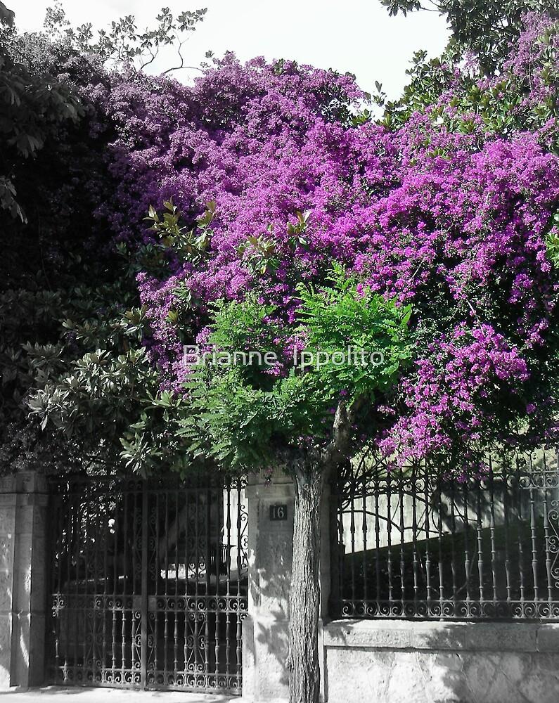 Ornate Purple by Brianne  Ippolito