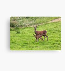 Mother and Baby Deer Canvas Print