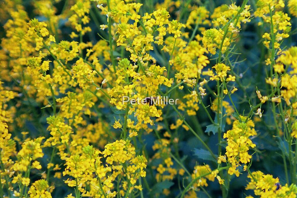 Bee by Pete Miller