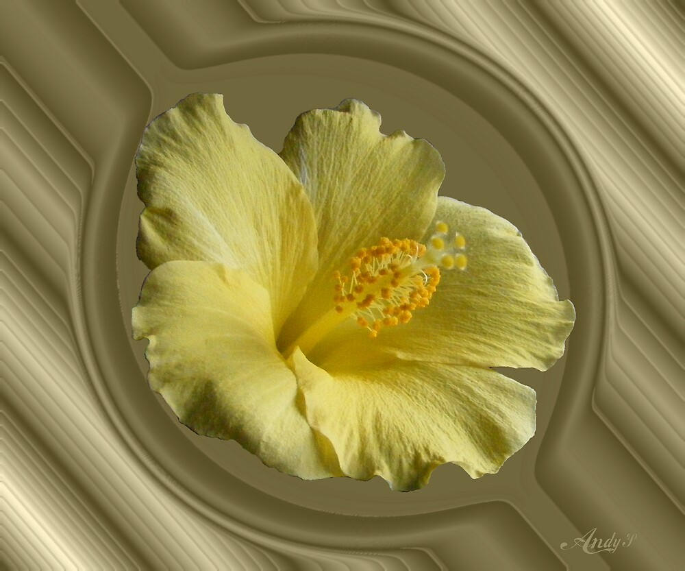 Hibiscus in port hole by Andy2302