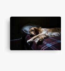 Sleeping Golden Retriever merchandise 2 Canvas Print