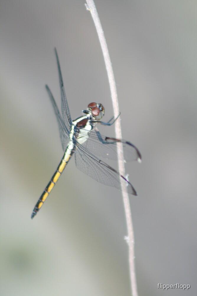 dragon fly rest by flipperflopp