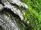 Moss on a Log by lindsycarranza