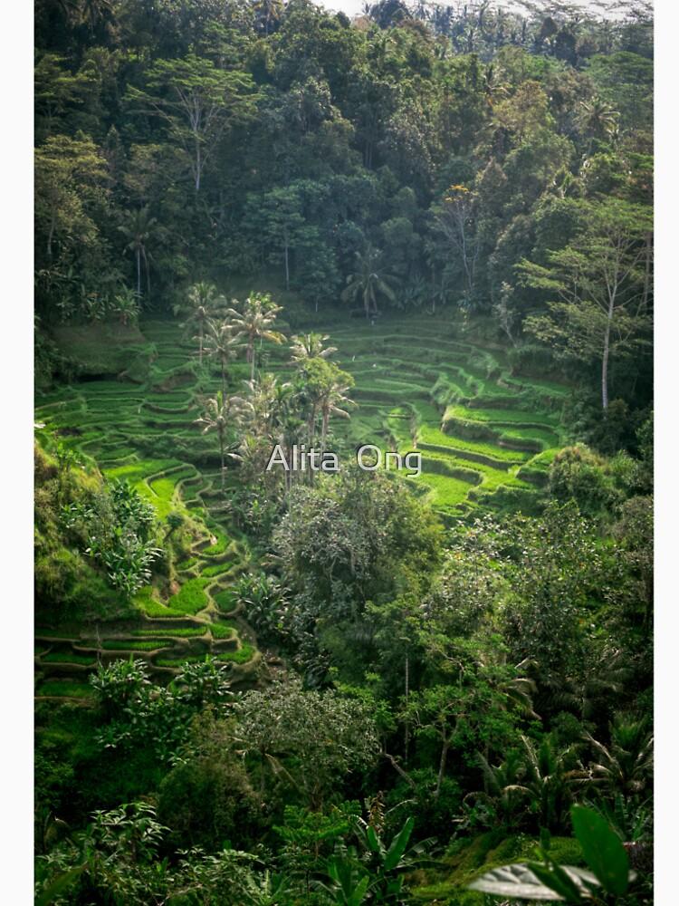 Terraza de arroz de Bali de artlyta